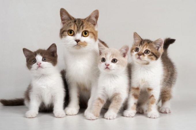 Are You Seeking Information About the World of Cats? Look Below!