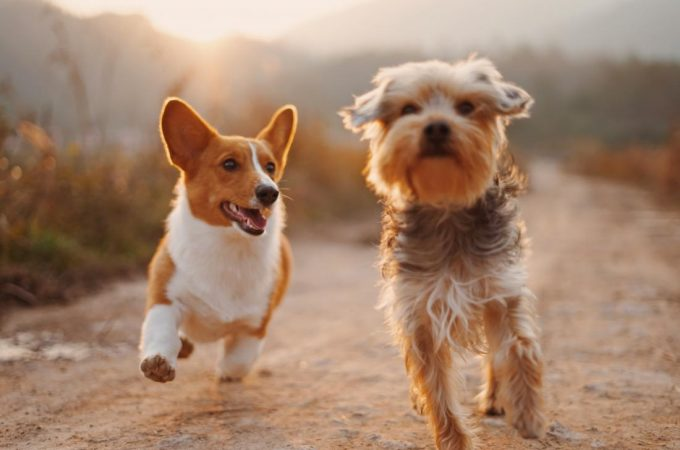 Cultivating Obedience in Your Dogs – It is Not That Hard!